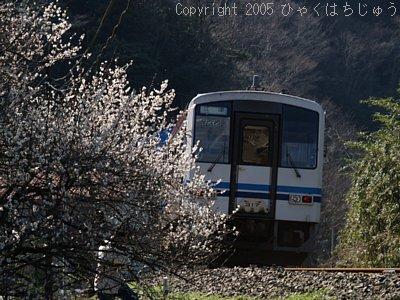 三江線と梅